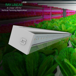 ray liner view 1 02