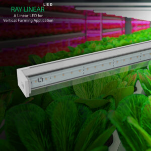 ray liner view 1 04